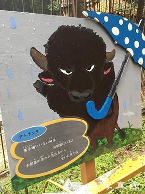 池田動物園のバイソン