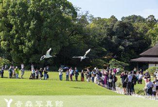 岡山後楽園タンチョウ鶴の放鳥